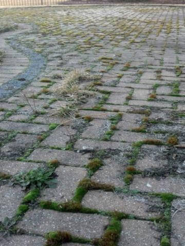 Paver Restoration Services in Chicagoland and the Illinois Area